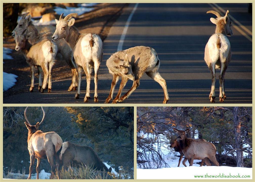 Grand Canyon animals
