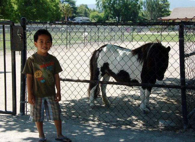 Quicksilver Ranch miniature horses