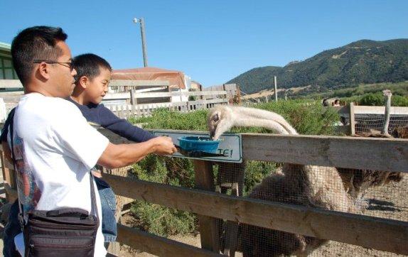 Feedings at Ostrichland USA