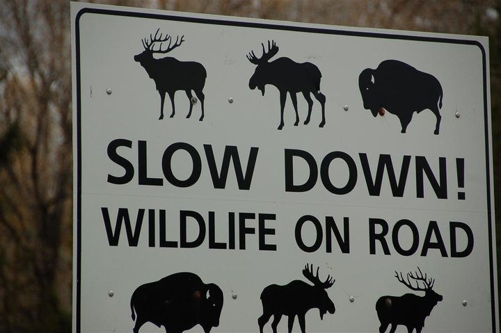 Grand Teton wildlife sign