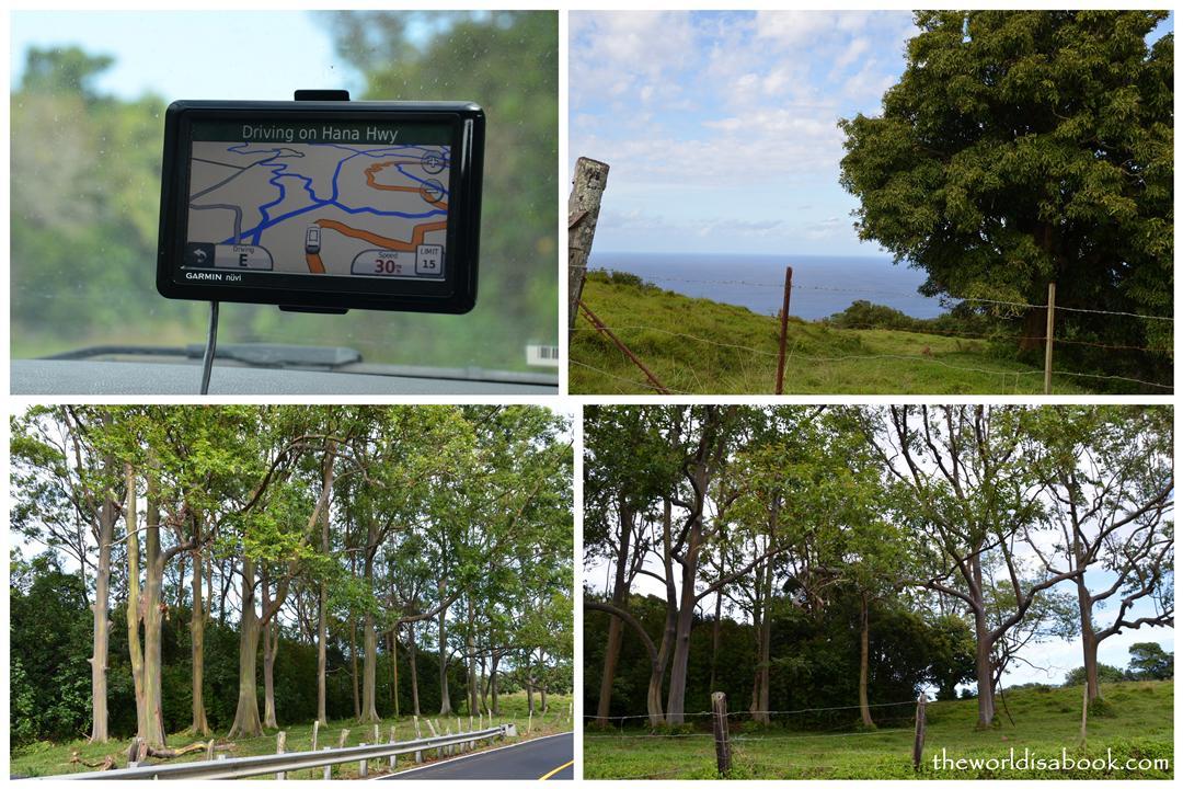 Rainbow Eucalyptus Hana highway Mile Marker 7