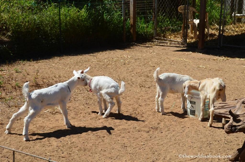 Maui goat farm