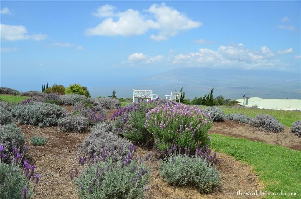 Alii Kula lavender farm maui