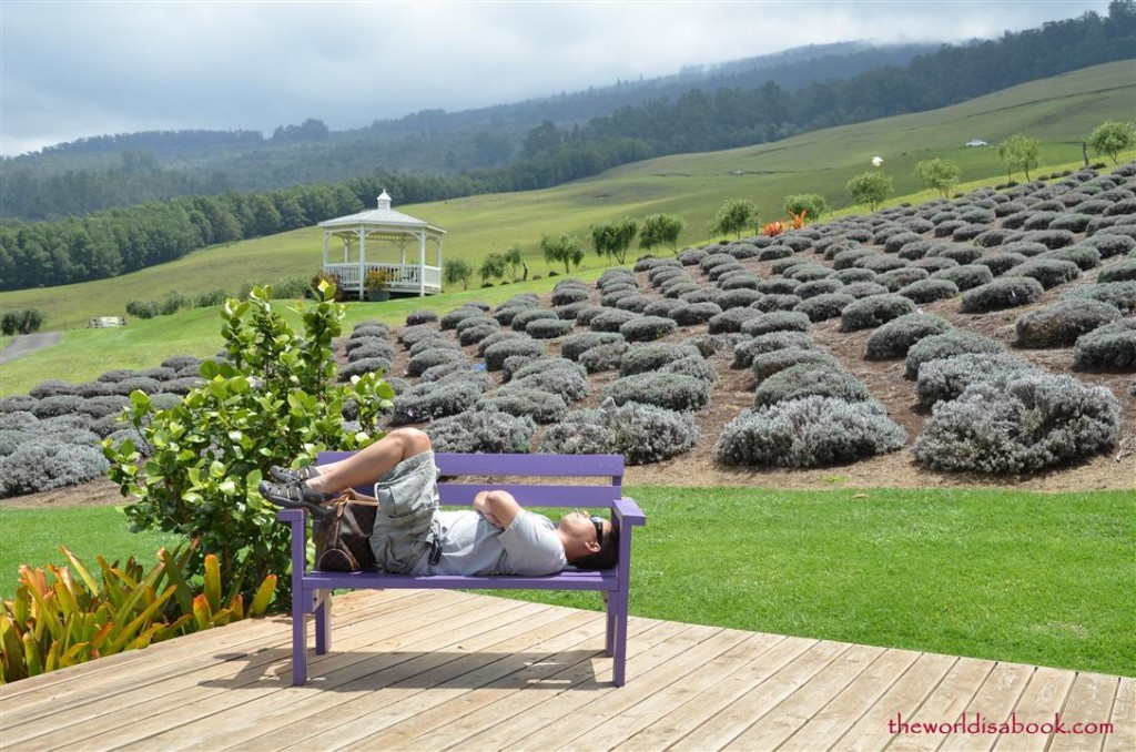 Sleeping at alii kula lavender