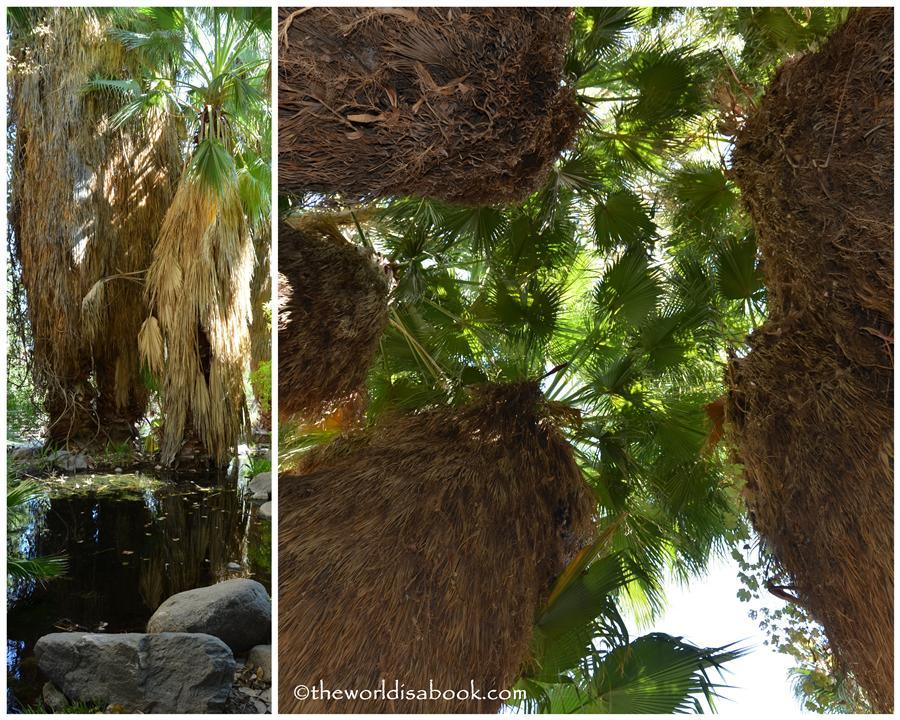 Palm Oasis Living Desert
