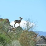 Palm Springs with kids: The Living Desert