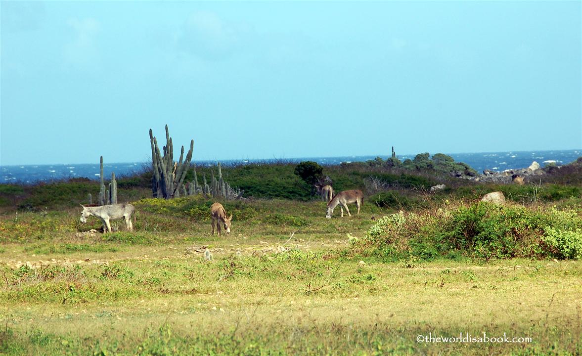 Donkeys in Bonaire