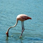 Bonaire with kids: Flamingos and Donkeys in the Wild