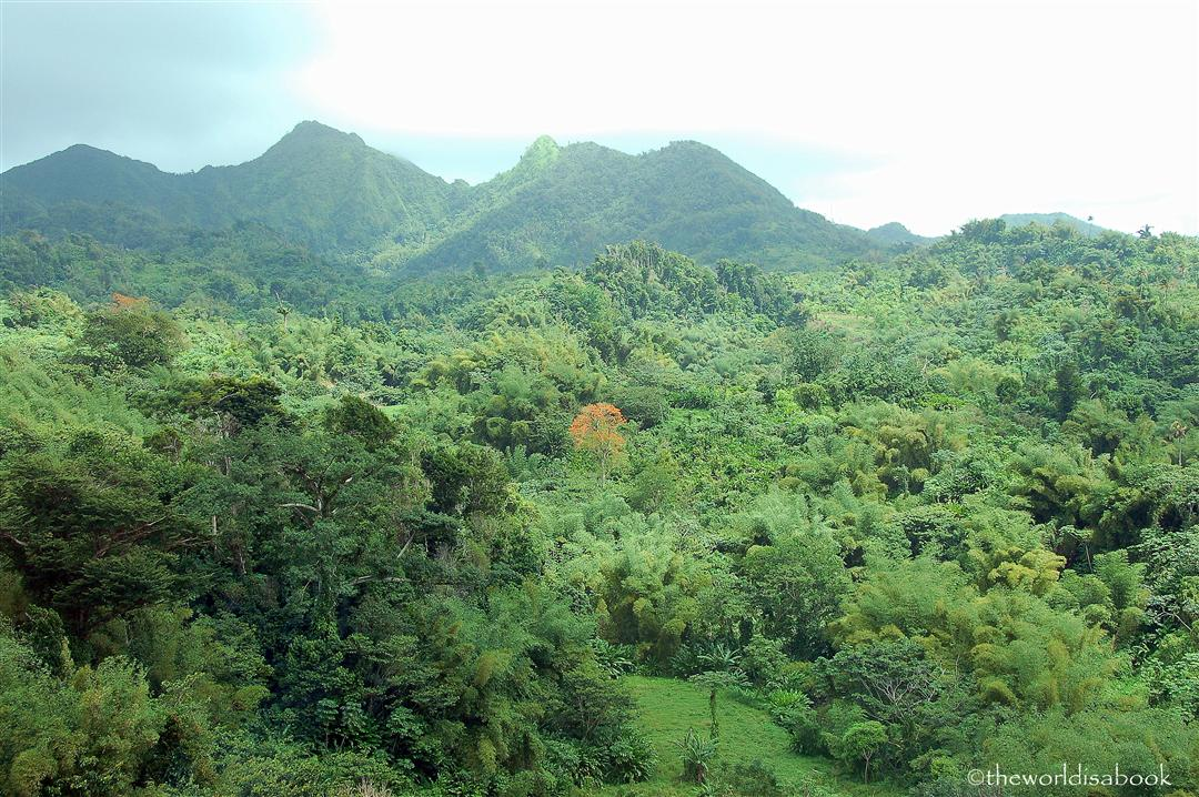 Grenada forest