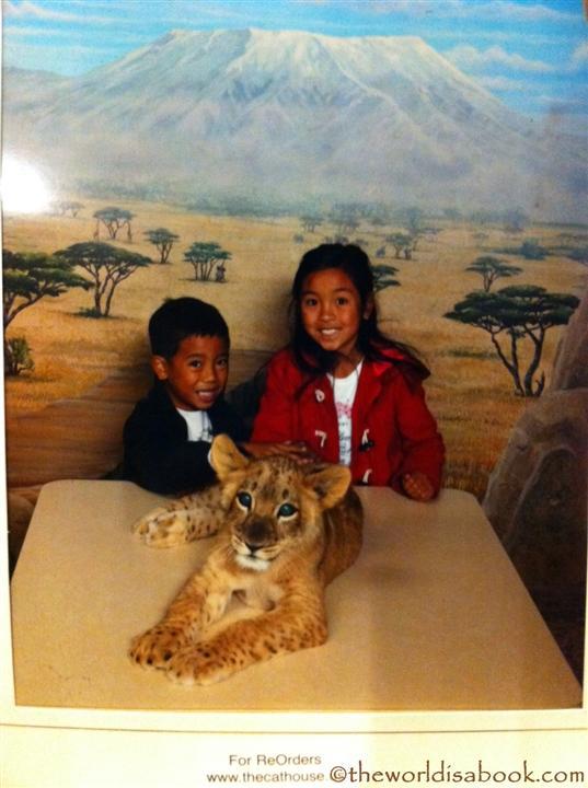 MGM Lion Habitat cub