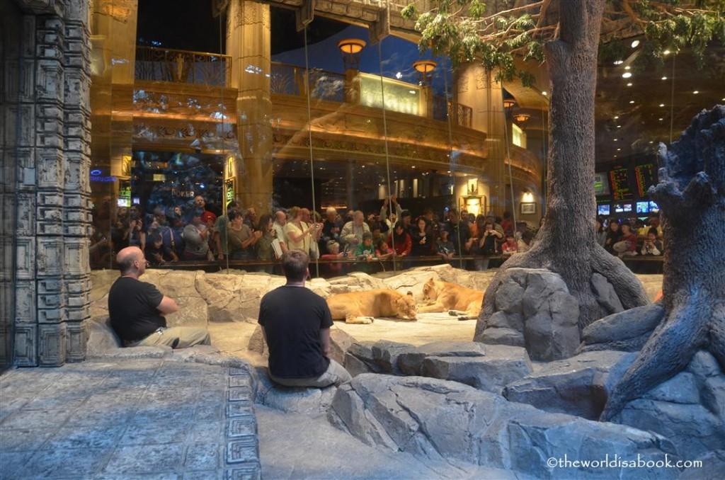 MGM Lion Habitat