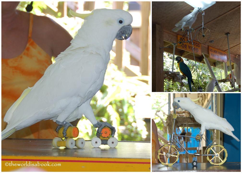 Paradise Point bird show