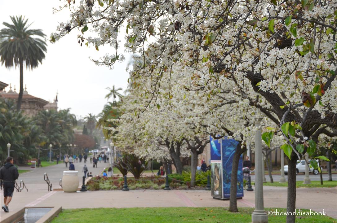 Balboa park promenade