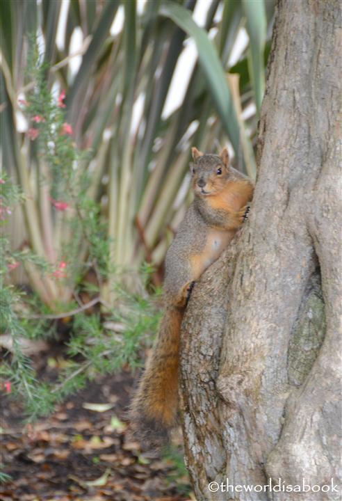 Balboa park squirrrel