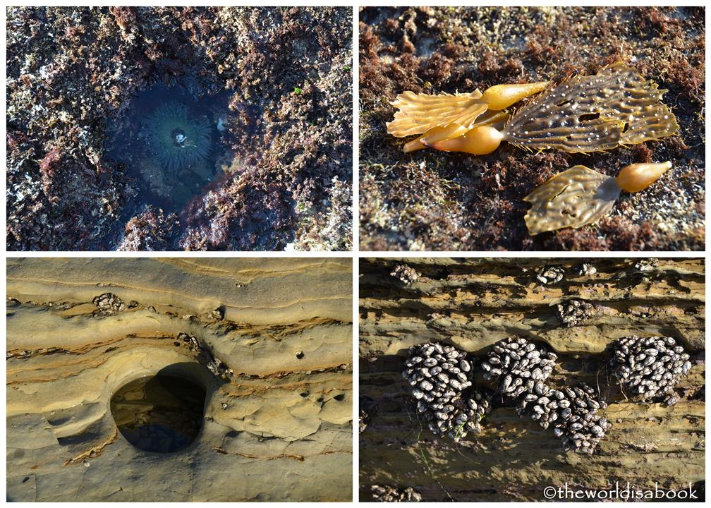 cabrillo national monument tide pool creatures