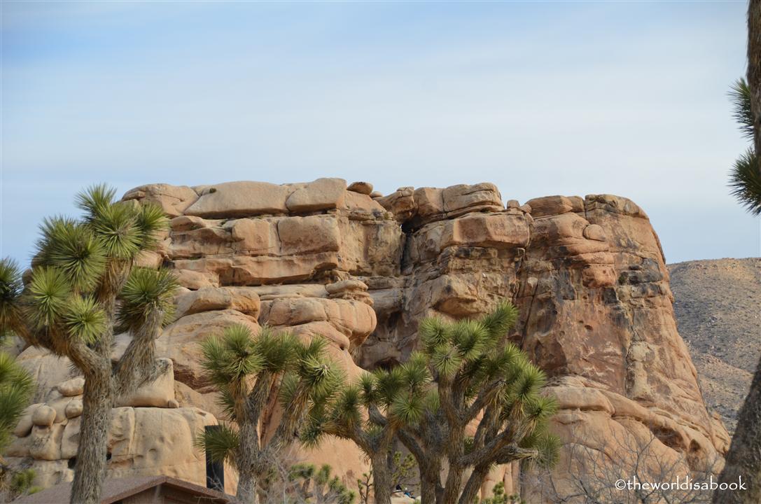 Joshua tree national park rock and tree