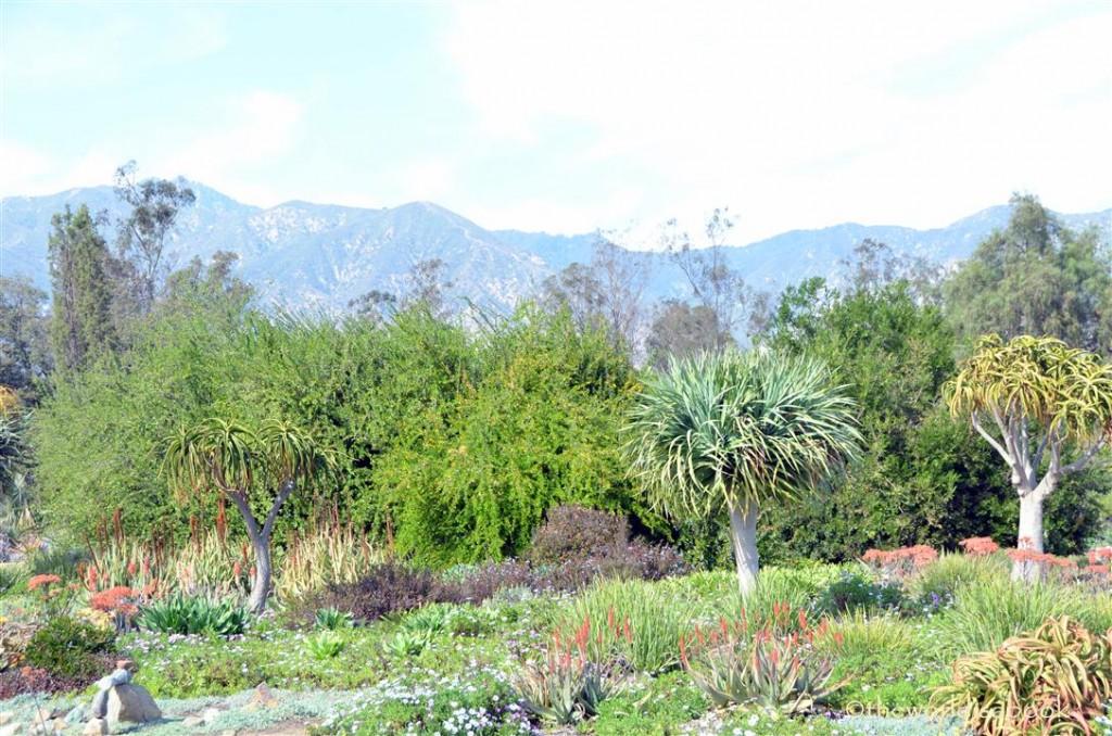 arboretum cactus garden