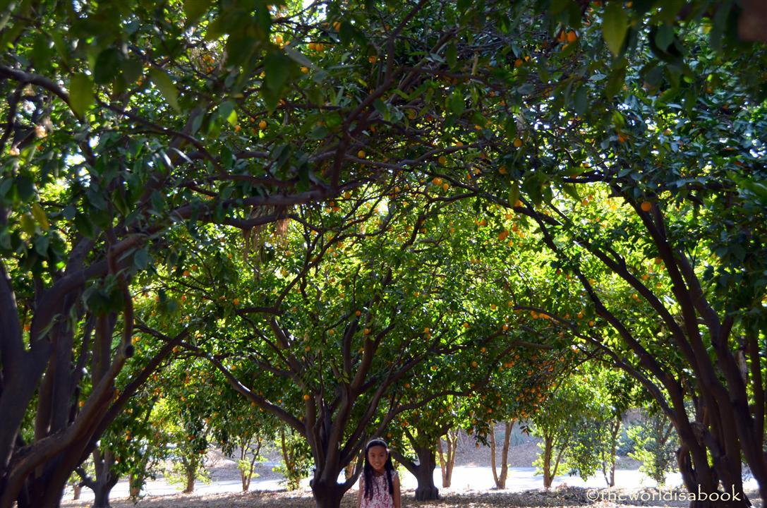 arboretum Citrus grove