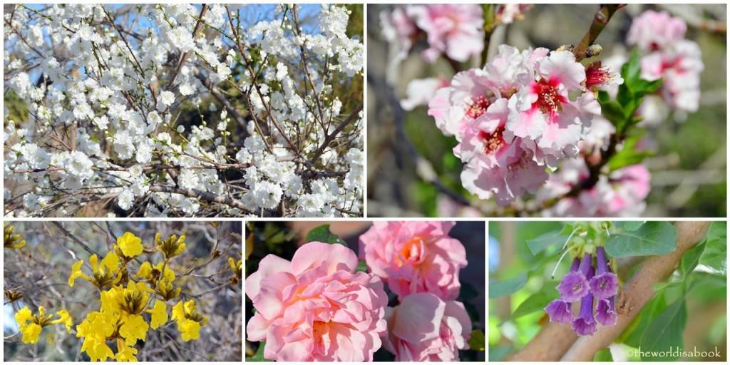 arboretum flowers image