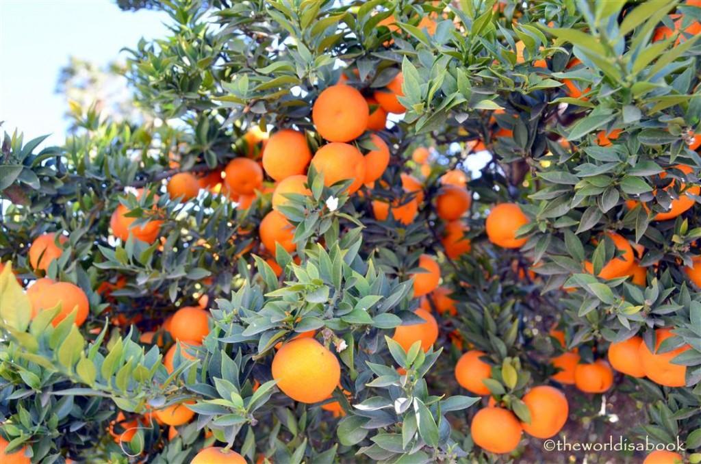 arboretum oranges