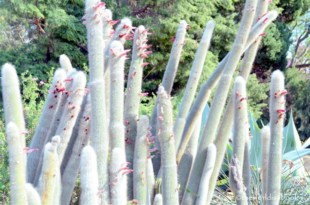 arboretum cactus image