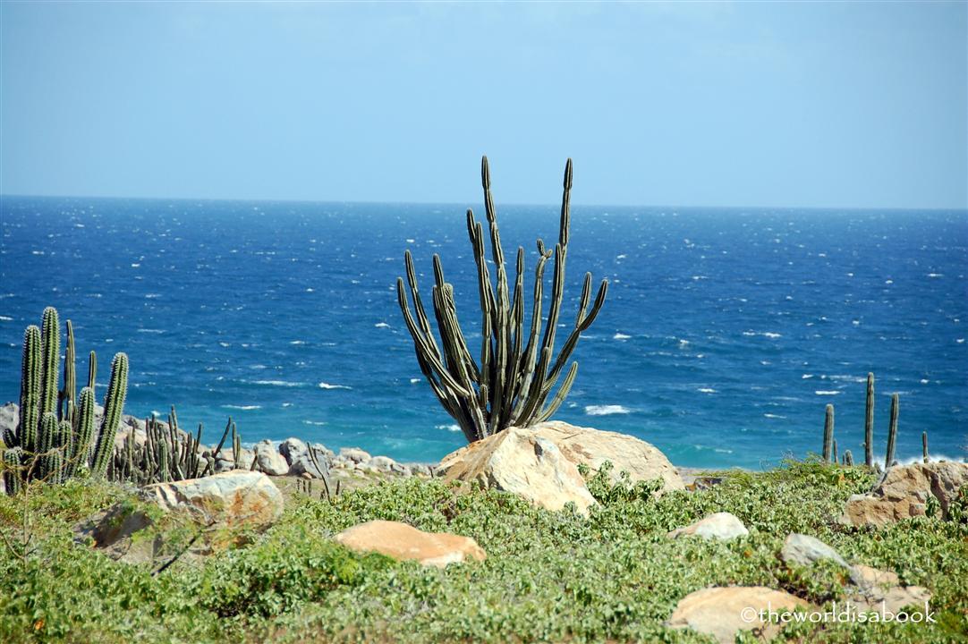 Aruba cactus and beach image