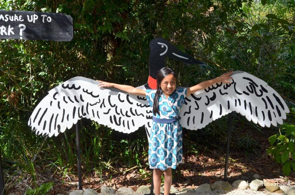Belize zoo jabiru stork
