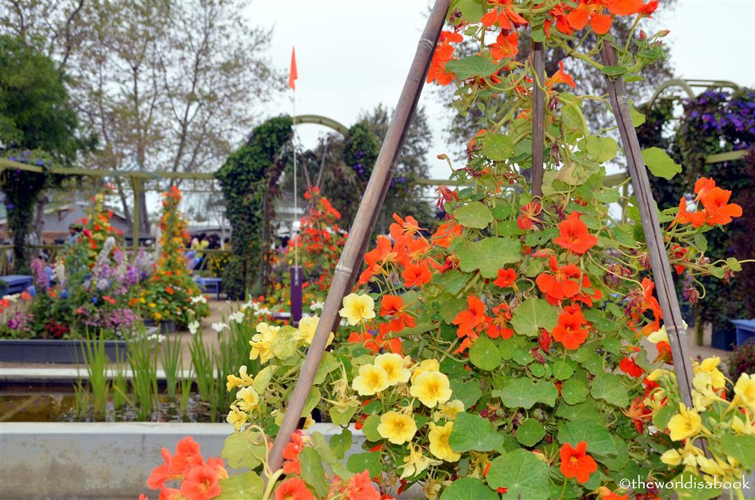 carlsbad Flower fields Artist Garden