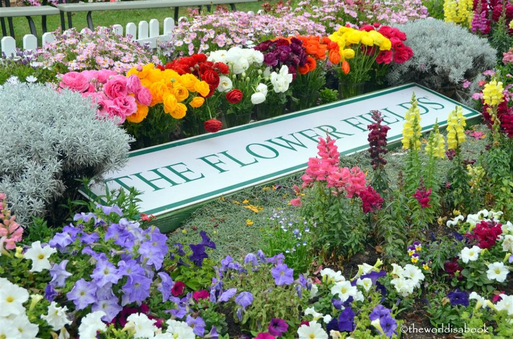 Carlsbad Flower Fields sign