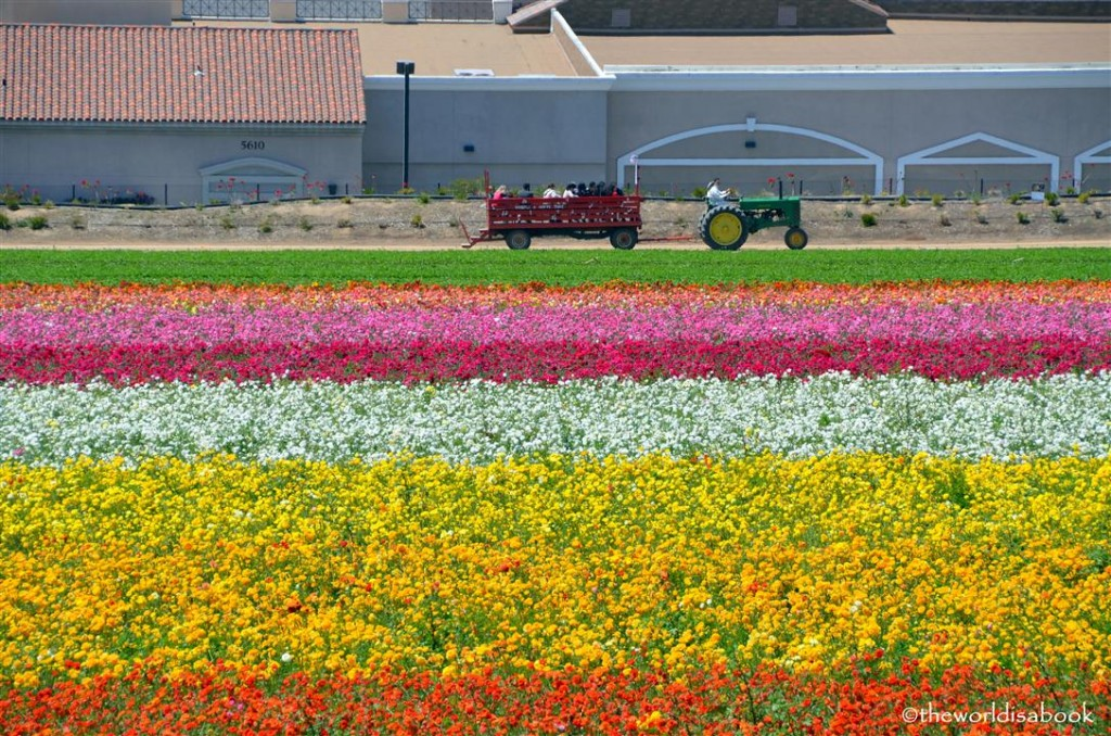 Carlsbad flower fields tractor