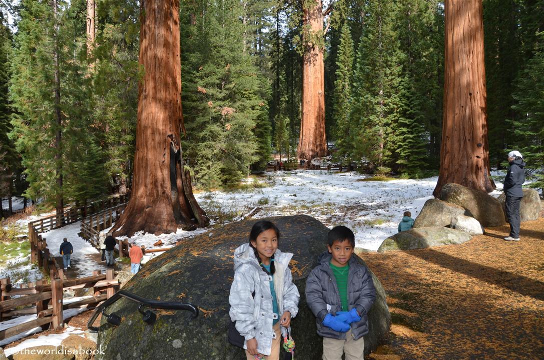 General Sherman grove sequoia national park