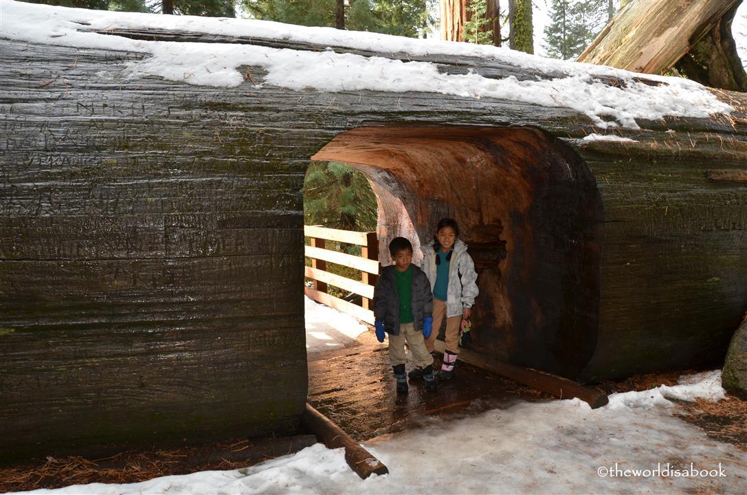 Sequoia National Park walk through tree