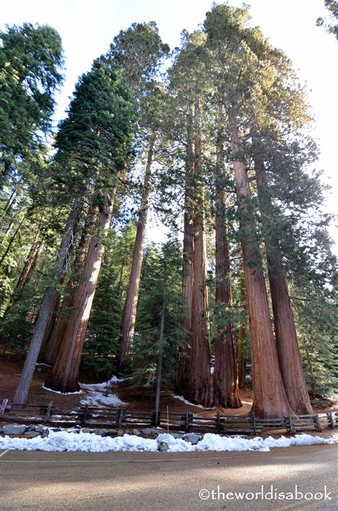 Sequoia Grove on General Sherman Highway