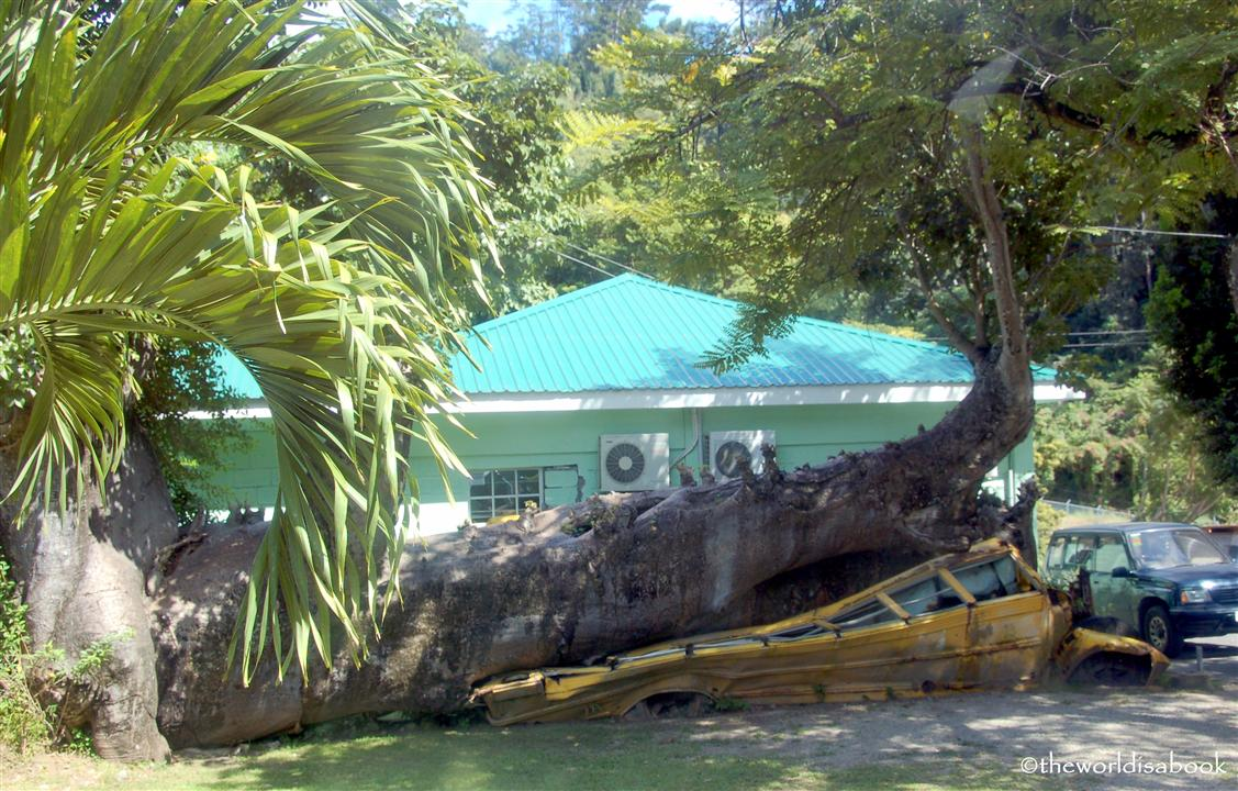 Dominica fallen tree on bus from david Hurricane image