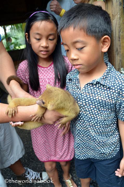 roatan victor bodden tour lemur image