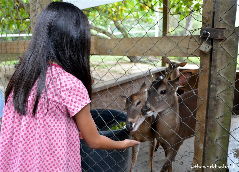 roatan victor bodden tour deer image