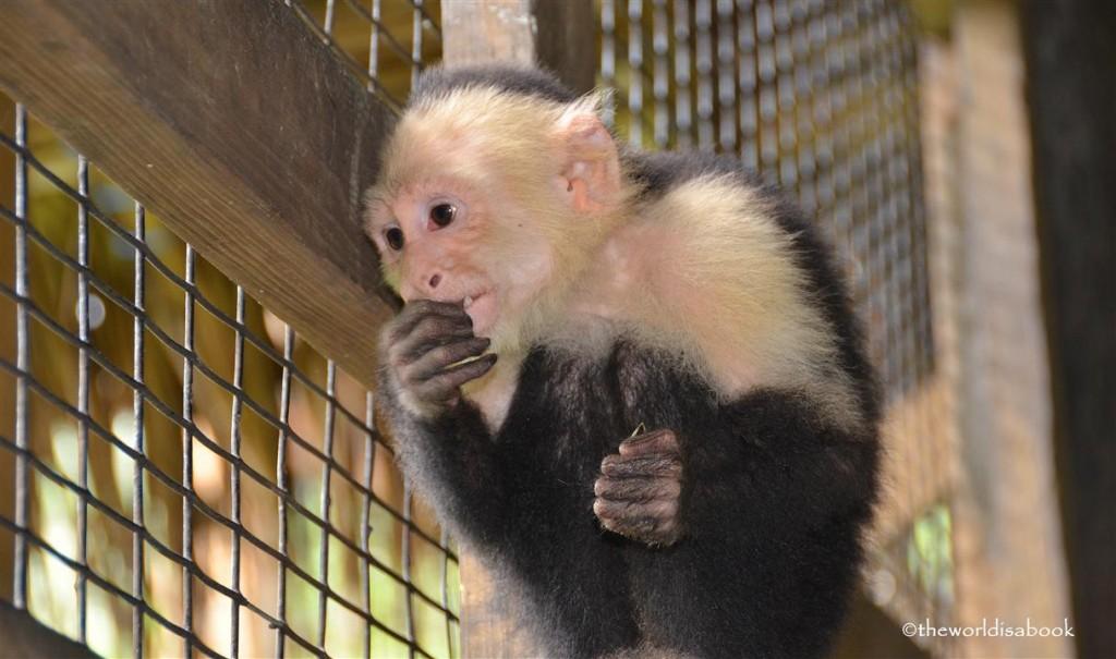 Roatan honduras victor bodden monkey business