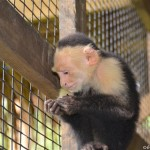 Roatan with kids: Monkey Business