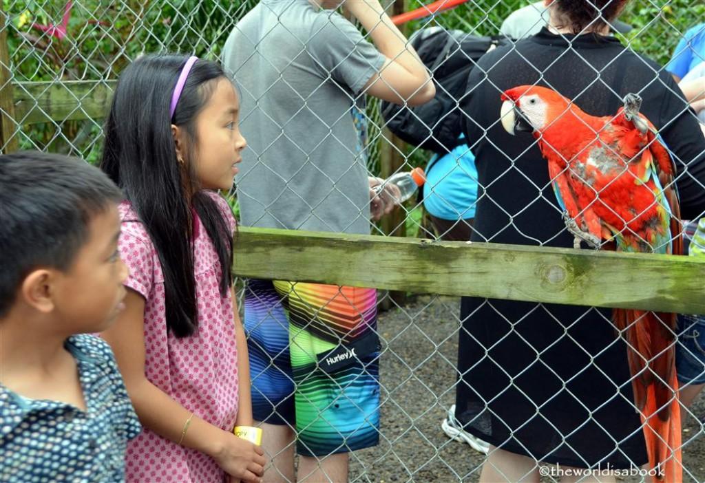 roatan honduras victor bodden parrot image