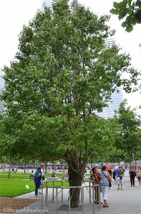 9/11 memorial survivor tree