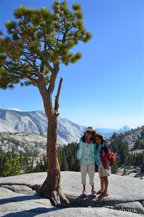 Olmsted Point pine boulder