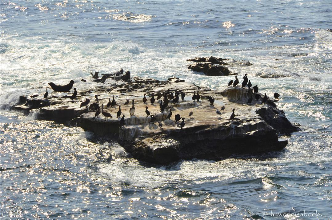 La Jolla Seal rock