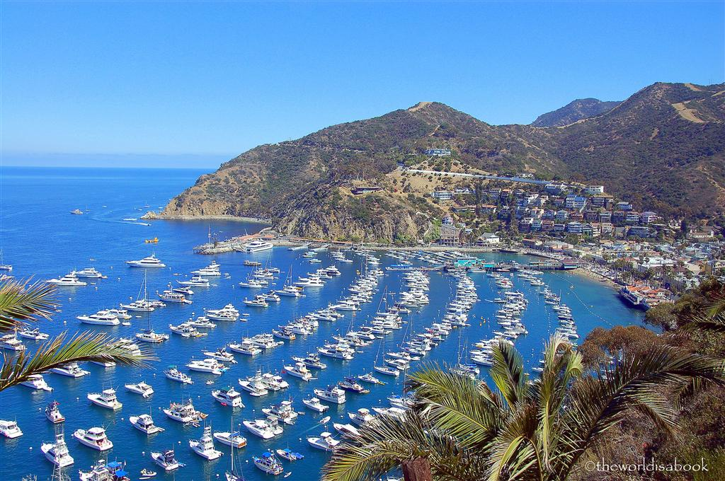 catalina island harbor view