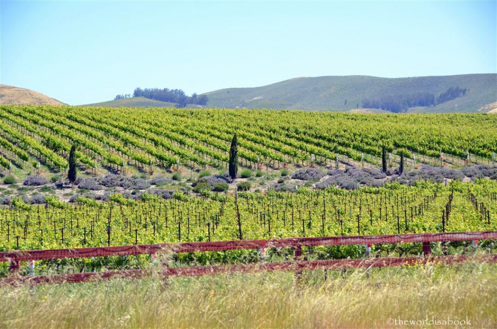 Central California vineyards