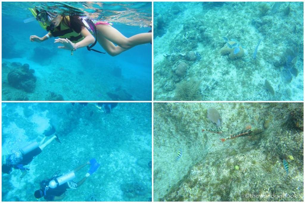 Chankanaab Snorkeling