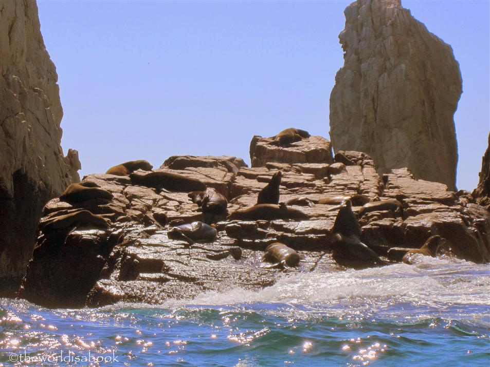 Cabo San Lucas sea lions