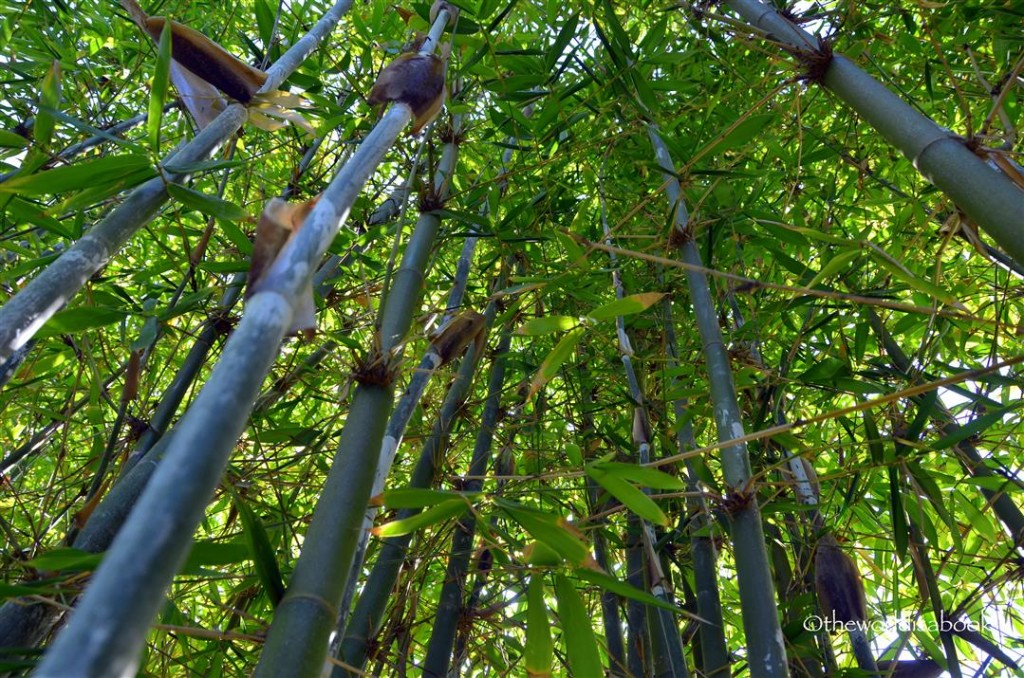 Japanese friendship garden bamboo