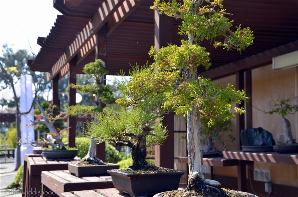 Japanese garden bonsai