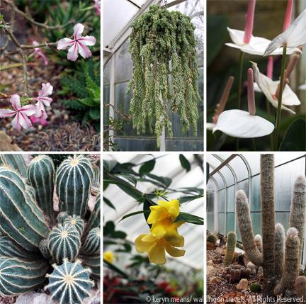 volunteer-park-conservatory-010