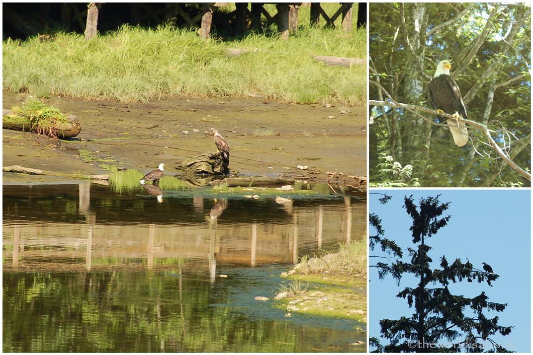Ketchikan eagles